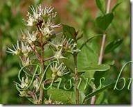 arbuste de henn - Coloration Vgtale Sans Henn