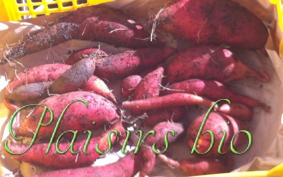 Jardinage urbain archives plaisirs bio - Comment planter des patates ...